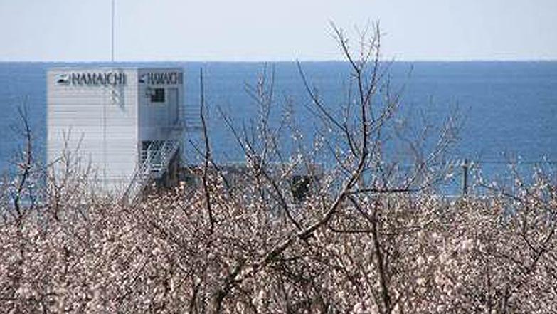 梅畑とHAMAICHI社屋