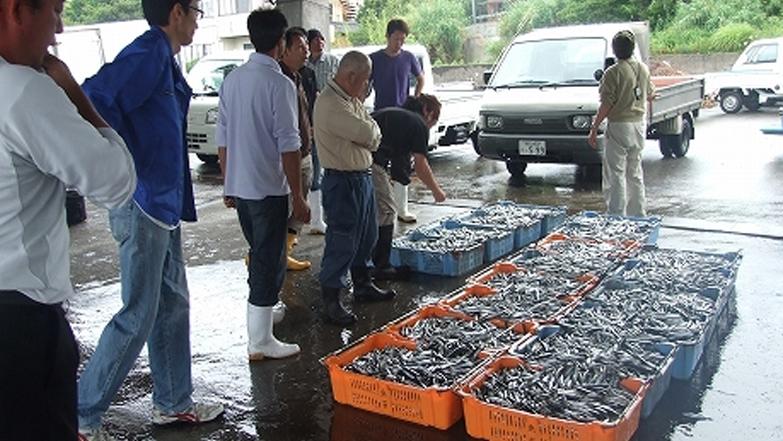 地元漁港での買付け(セリ)