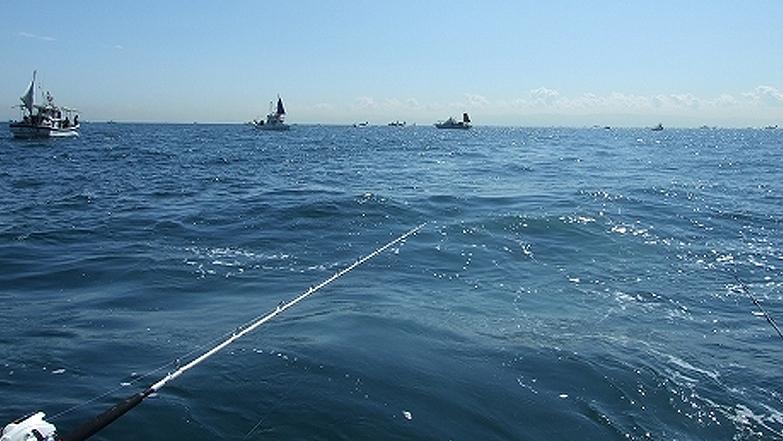 連日賑わう神戸沖のタチウオ船の群