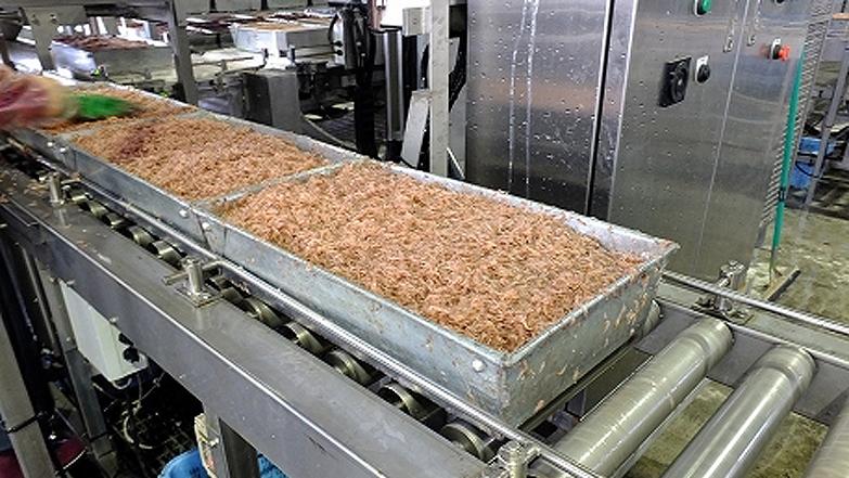 提携加工場で急速凍結に入る直前のアミエビ