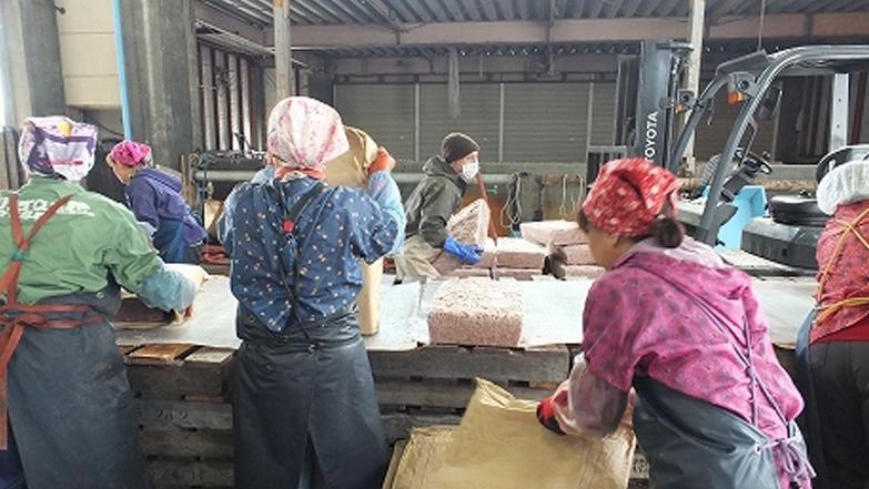 岩手県釜石のアミエビ生産現場
