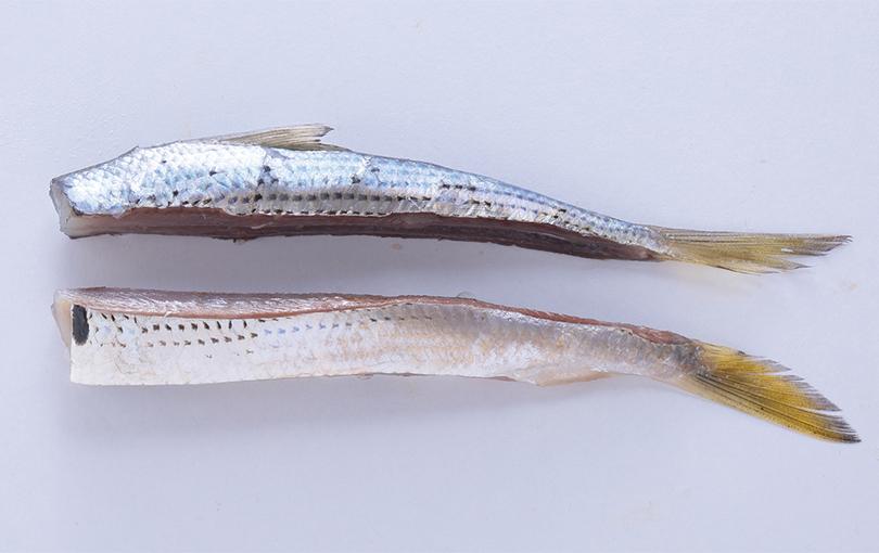 コノシロ漁師切り(ブルー)